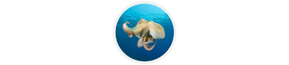 первоклассные морепродукты