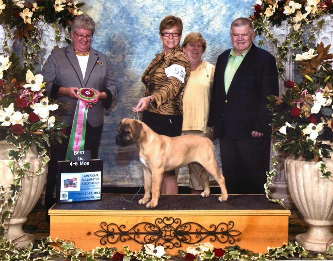 Mrs Beasley, Ch. Squaredeal N Bramstoke's Family Affair. Best Baby Puppy in American National Specialty