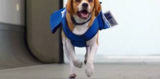 KLM dog viral video