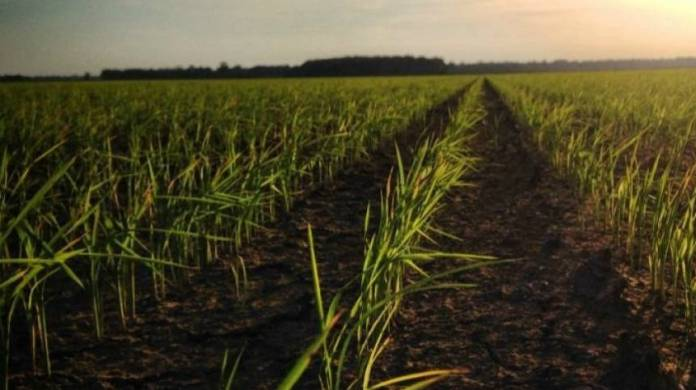Anheuser - Busch USA Rice Partnership