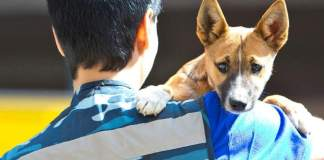 aeroflot sniffer dogs