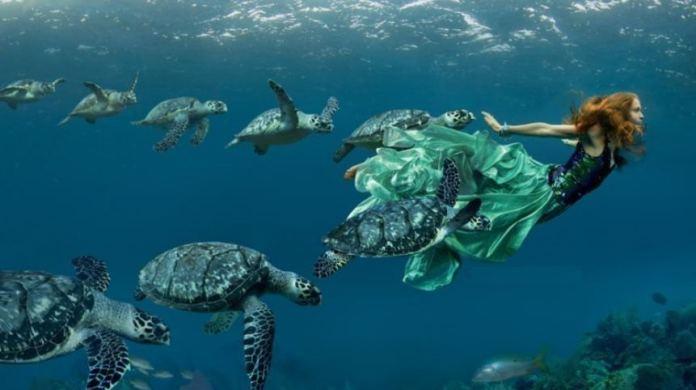cayman islands campaign
