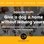 """Pedigree launches virtual pet adoption with """"Dogs On Zoom"""" campaign"""
