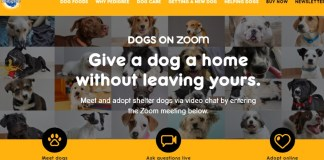 "Pedigree launches virtual pet adoption with ""Dogs On Zoom"" campaign"