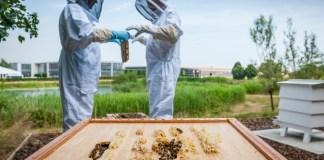Rolls-Royce exclusive honey exceeds their 2020 volume targets