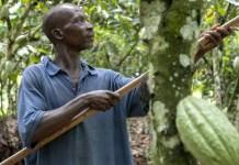 Godiva promotes sustainable change with Earthworm Foundation