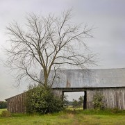 Old Shed and Tree