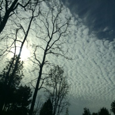 cloud_ripples_with_skeletal_tree_silhouette
