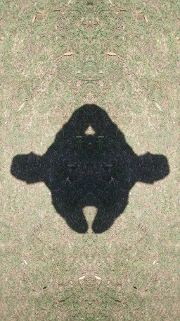 A warped image of my shadow that when rotated revealed a monter in the grass.