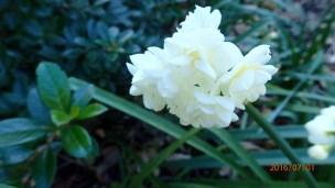 Royal-botanical-gardensa010716.10
