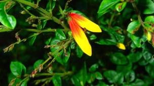 Royal-botanical-gardensa010716.15