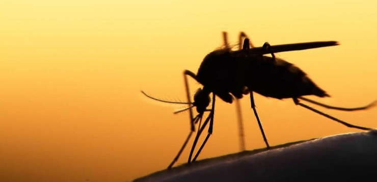 WORLD MALARIA DAY 2018: FACTS, SYMPTOMS OF DISEASE CARRIED BY MOSQUITOES