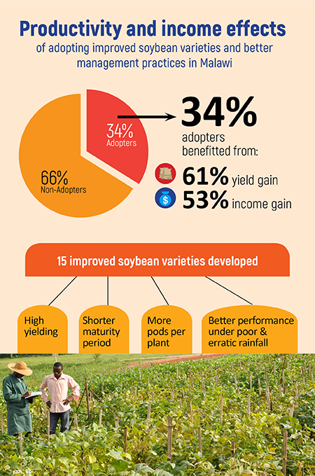 Improved Soybean Varieties Increase Farmer Incomes By 53% – Study Shows - Brand Spur