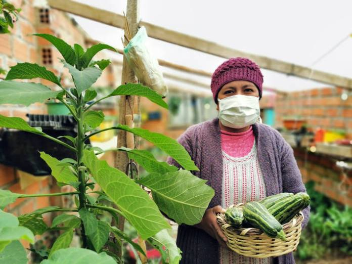 Impact of COVID-19 on people's livelihoods, their health and our food systems