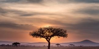 World Bank Plans to Invest over $5 Billion in Drylands in Africa