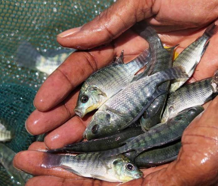 Global fisheries and aquaculture hard hit by COVID-19 pandemic, says FAO report Brandspurng