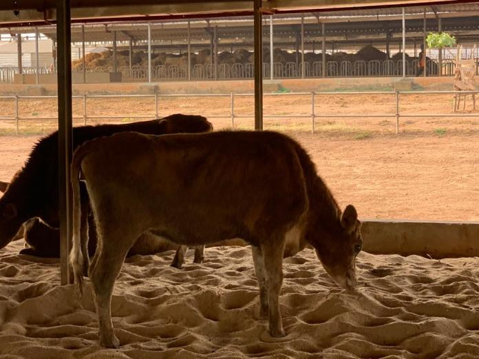 US Mission Shares Photos of Dairy Farm in Ekiti State