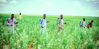 Syngenta, WACOT Partner To Boost Nigeria's Food Security-Brand Spur Nigeria