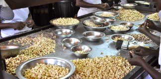 Cashing In On Cashews: Africa Must Add Value To Its Nuts - UNCTAD