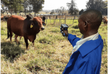 Zimbabwe Becomes the First Africa Country to Roll-out E-Livestock's Cattle Logging System