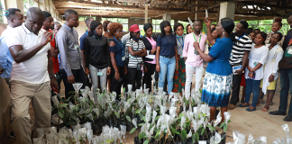 IITA Research Fellows To Partner National Research Institutes For Development-Brand Spur Nigeria