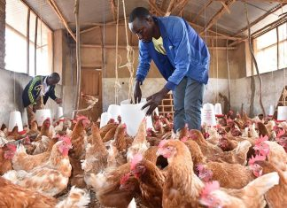 Poultry Farmers Groan, Say Soybean Price Rises By 300%