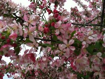 Spring in Salt Lake City :)