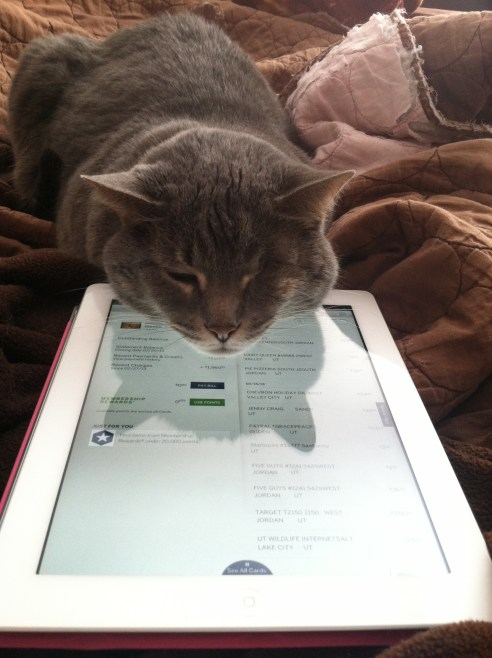 BBQ asking for a turn on the iPad *LOL*