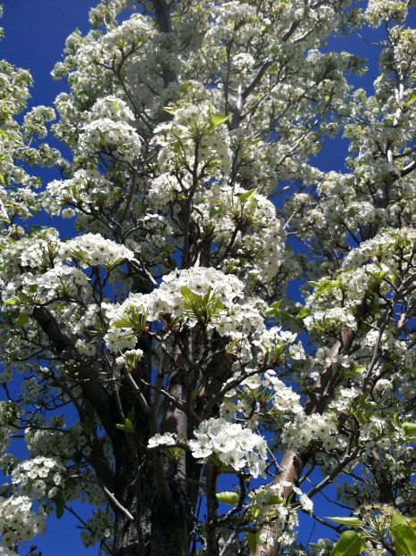 Beautiful Blossoms :)