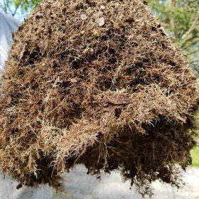 Root Pruned Rootball