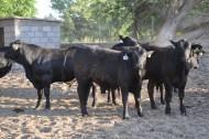 toretes rancho tarahumar - 03