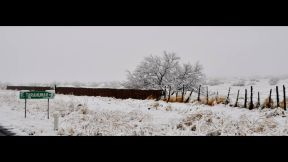 nevada buenaventura marzo 8 - 1