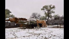 nevada buenaventura marzo 8 - 6