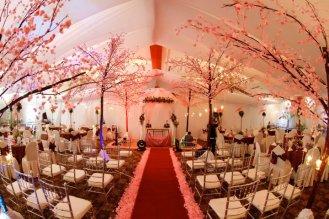 Branham Perceptions Photography - Cherry Blossom (2)