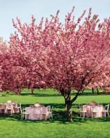 Branham Perceptions Photography - Cherry Blossom (6)