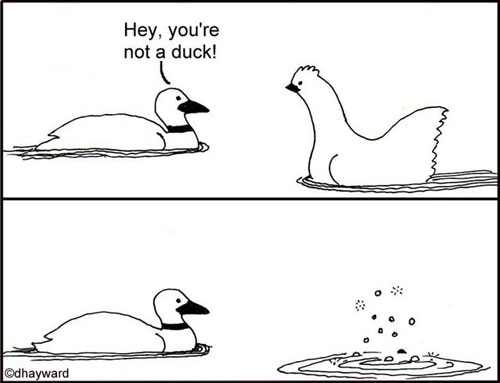 you-are-not-a-duck