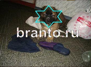 Найди собаку відповіді на игру в Одноклассниках, в ...