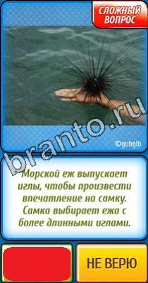 Подсказки на игру Ты не поверишь в Одноклассниках: уровни ...