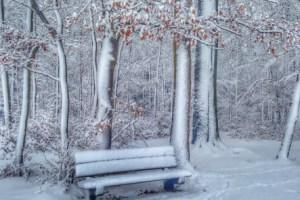 Winterwonderland Snow