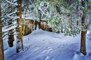 Winterwonderland Woods
