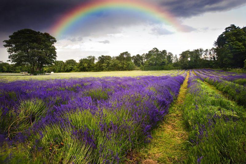 arco-iris - aprenda as cores em ingles