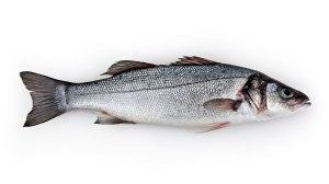 Robalo é um dos peixes mais falsificados no mercado
