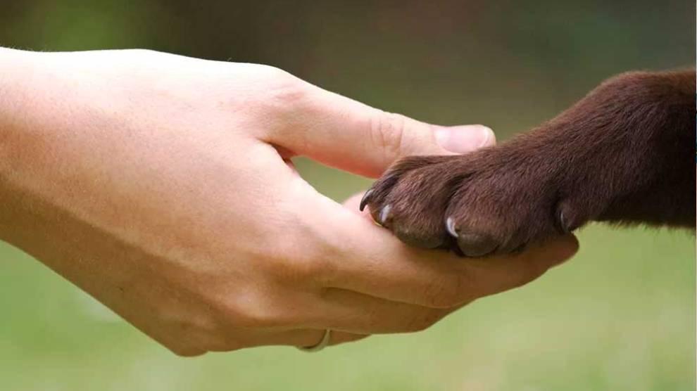 Cadastro de protetores de animais domésticos vai até 30 de outubro
