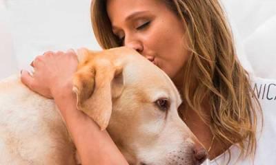 Após denúncia de Luisa Mell, 135 cães vítimas de maus-tratos são resgatados de canil