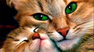 A complexidade felina