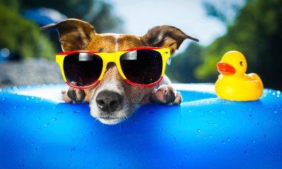18 dicas de cuidados para os cães com a chegada do Verão