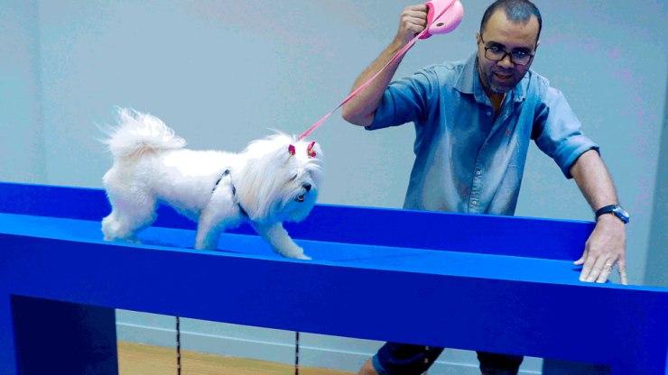 Pets ganham espaço para se divertir em shopping da capital. Foto: Cristiano Sérgio/ FOTOFORUM