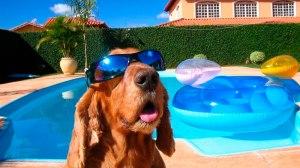 10 cuidados que devem ser tomados com pets nos dias de calor