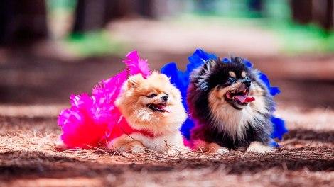 Que tal curtir o carnaval com o seu Pet?