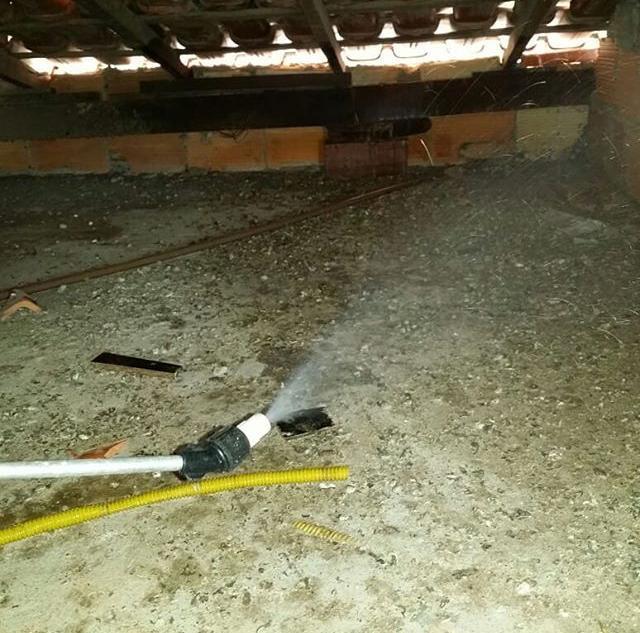 Dedetização de ratos em Betim